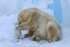 zenontheseas: Polar bear with cub. Mother love by belovodchenko