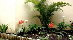 jardines pequeños de sombra - Buscar con Google