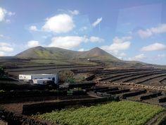 L'agriculture locale.