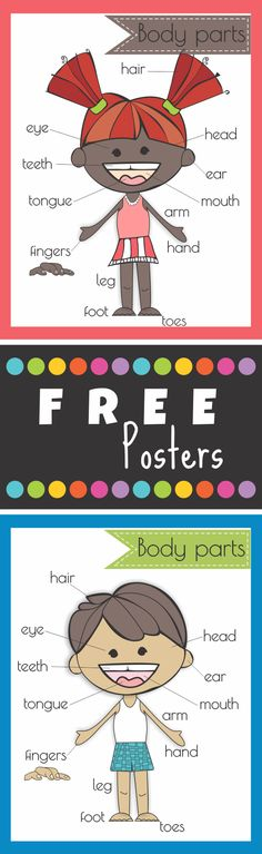 Free body parts posters. Perfect for primary grades. #kindergarten