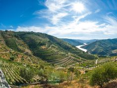 #Portugal's #Douro Valley - one of the world's oldest #wine regions - via New zealand Herald 06.08.2016 | Gliding slowly along the motionless Douro River, we slice through near-perfect reflections of undulating hills etched with vine terraces resembling contours on a map.