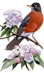 This isn't going to my exact design, I still have to come up with that, but it's my inspiration for my first tattoo which I want to get before I go to Japan. CT state flower (mountain laurel) and bird (robin) so no matter where I go, I will always remember my roots <3