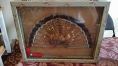 beautiful for a turkey fan too! Taxidermy Display, Bird Taxidermy, Hunting Gifts, Bow Hunting, Hunting Stuff, Turkey Mounts, Grouse Hunting, Turkey Fan, Trophy Display