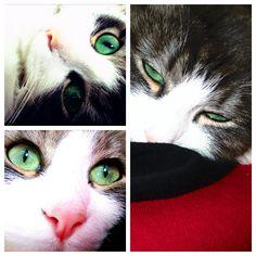 mon chat Izzy