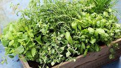 Come coltivare le erbe aromatiche in casa e averle fresche tutto l'anno