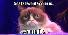 Grumpy Cat tells a joke.