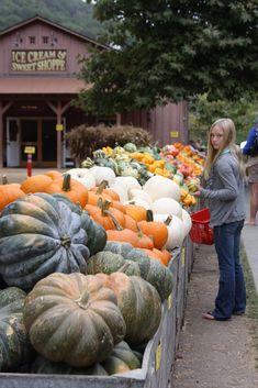 Avila Valley Barn, San Luis Obispo, CA. During the season, we go to pick our olallieberries at the u-pick farm.