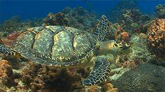 naturegifs: Exploring the Coral Reef