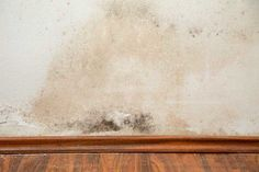 Deep Cleaning, Cleaning Hacks, Mold And Mildew Remover, Types Of Fungi, Shower Cabin, Professional Cleaning Services, Dry Ice, Cleaning Companies, Picture Credit