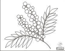 Mimosa Da Colorare.8 Fantastiche Immagini Su Festa Della Donna Nel 2019 Marzo