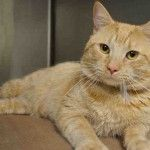 A1039048 - GARFIELD  dont let me die!