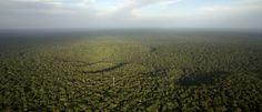 Floresta amazônica tem o maior desmatamento em nove anos