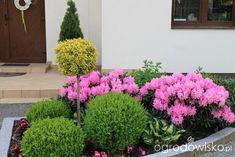Igiełkowy ogródeczek - strona 496 - Forum ogrodnicze - Ogrodowisko