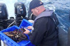 Project help with Northumberland's marine management - Northumberland Gazette