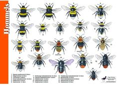 Determineren : Zoekkaarten & Links – Project Love For Bees Bees Knees, Fauna, Life Is Beautiful, Trees To Plant, Pet Birds, Cute Animals, Wildlife, Plants, Painting