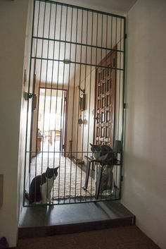 Temporary Door, Cat Gate, Outdoor Cat Enclosure, Soft Kitty Warm Kitty, Cat Playground, Cat Room, Outdoor Cats, Space Cat, Steel Metal