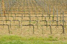 #maremma #italy #wine