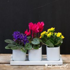 Blooming Perfect Trio  https://www.lebouquet.com/en/perfect-trio
