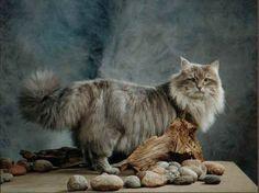 ... Cats, Animals, Lovers, Gatos, Animais, Animales, Animaux, Animal, Kitty