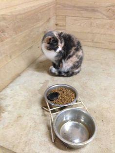 Rato intrometido comendo a comida do gato - Fotos e fotos - Seu portal de imagens grátis