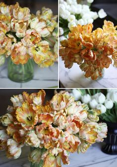 to do list for Fall...plant more parrot tulips