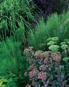 Be Bold with Fine Texture | Fine Gardening
