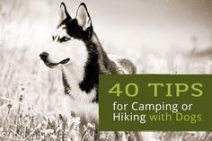 UPDATED: 40 Tips for Camping or Hiking with Dogs