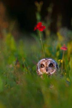 Owl in the field by Andrew Bertram