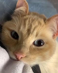 Funny Cute Cats, Cute Cats And Kittens, Cute Funny Animals, Cute Baby Animals, Kittens Cutest, Animals And Pets, Ragdoll Kittens, Tabby Cats, Funny Kittens
