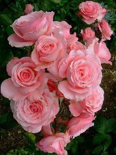 Trandafiri pentru ziua mea..