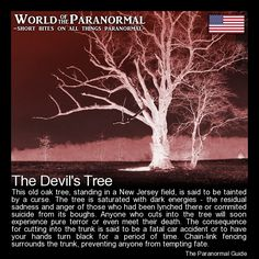 The Devil's Tree - Just outside of Bernards Township, New Jersey - 'World of the Paranormal' are short bite sized posts covering paranormal locations, events, personalities and objects from all across the globe. Scary Creepy Stories, Spooky Stories, Creepy Facts, Ghost Stories, Horror Stories, Creepy Stuff, Scary Things, Creepy Gif, Strange Stories