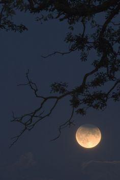 harvestheart:  Moonglow