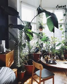 38 Stunning Urban Jungle Room Decor That Will Make Your Home More Cozy - Decor Renewal Indoor Plants Clean Air, Indoor Plant Wall, Indoor Plants Low Light, Indoor Garden, Home Design, Interior Design, Design Ideas, Jungle Room, Deco Nature
