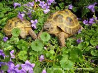 Plant Categories, Garden and House Plants - The Tortoise table