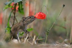 Animais-cheirando-flores-12
