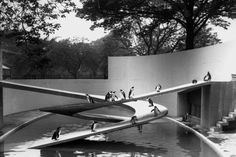 "jonasgrossmann: "" penguin pool, london zoo, by berthold lubetkin, 1934 @ architectmagazine """