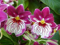 Top 10 most popular flowers Types Of Flower Arrangement, Types Of Flowers, Flower Arrangements, Pictures Of Spring Flowers, Flower Pictures, Most Popular Flowers, Shade Plants, Garden Styles, Flower Power