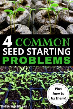 Vegetable Gardening Ideas: Learn the most common seed starting problems AND how to fix them