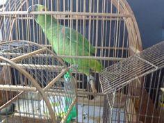UNAIENSES: SERRANÓPOLIS-MG - Doze pássaros silvestres são apr...