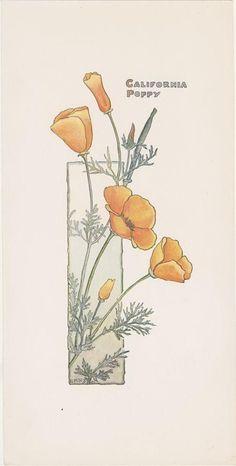 California Poppy | Botanical Illustration
