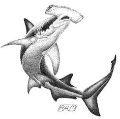 Topics in Shark Biology Dotted Drawings, Fish Drawings, Animal Drawings, Hai Tattoos, Dove Tattoos, Hammerhead Shark Tattoo, Scuba Diving Tattoo, Ocean Sleeve, Nautical Tattoos