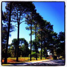 Trees, just trees
