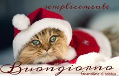here comes santa-cat! I Love Cats, Cute Cats, Funny Cats, Funny Animals, Cute Animals, Christmas Kitten, Christmas Animals, Merry Christmas, Funny Christmas