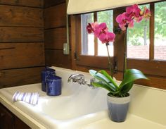 Vibrant Purple Orchid in Cottage
