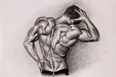 Image result for human body sketch abs