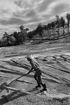 Sebastião Salgado chronicles and celebrates coffee growers, in pictures. Brazil