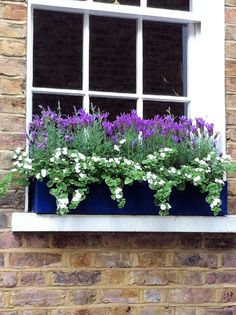 Amazing Windows Flower Boxes Design Ideas Must See - Pflanzideen Window Box Plants, Window Box Flowers, Window Planter Boxes, Planter Ideas, Balcony Flower Box, Window Sill, Container Plants, Container Gardening, Succulent Containers
