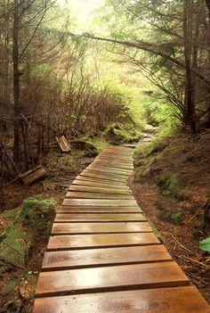 A winding footpath in an Alaskan forest...  Sitka Path 1 334  Fine Art Digital Photo by DaleODellPhotography, $30.00
