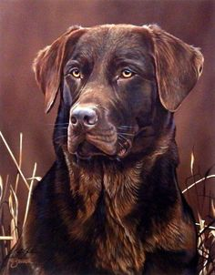 Black Labrador Scot Storm Loyal Companion- Chocolate Lab (Chocolate Lab Water) - This print is signed and is available unframed in an image size of Golden Retriever, Labrador Retriever Dog, Labrador Dogs, Rottweiler Puppies, Lab Puppies, Big Dogs, I Love Dogs, Tier Fotos, Dog Paintings