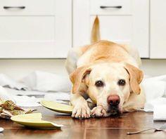Las Mejores 59 Ideas De Decoración Para Mascotas Decoración Para Mascotas Mascotas Decoración De Unas